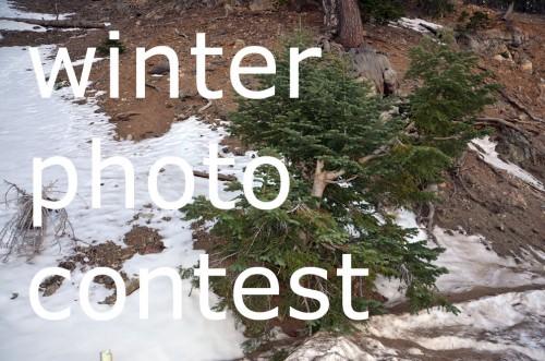 Swrve Photo Contest